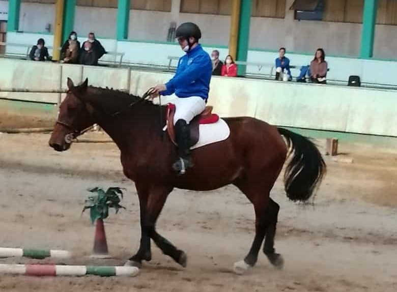 Campionato regionale equitazione gimkana, Cislago